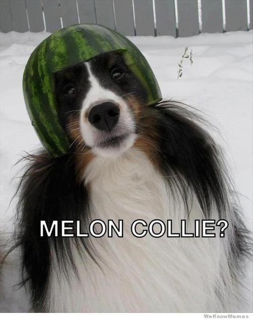 Melon Collie Melon Meme