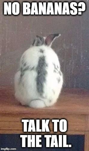 No Banana Talk To The Tail Rabbit Meme