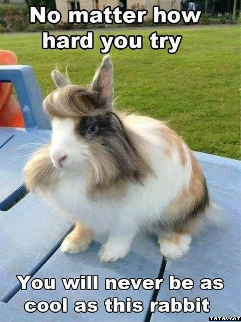 No Matter How Hard You Try Rabbit Meme