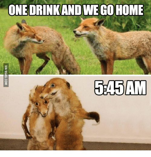 One Drink And We Go Home Fox Meme