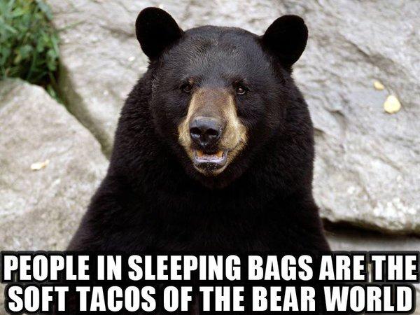 People In Sleeping Bags Black Bear Meme