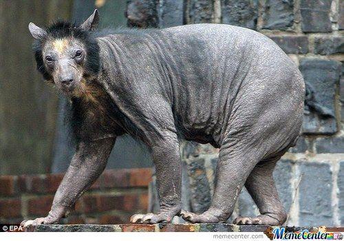 Scary Black Bear Meme