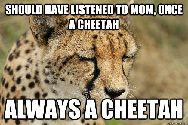 Should Have Listened To Mom Cheetah Meme