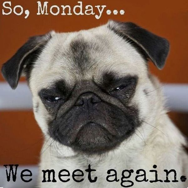 So Monday We Meet Monday Meme
