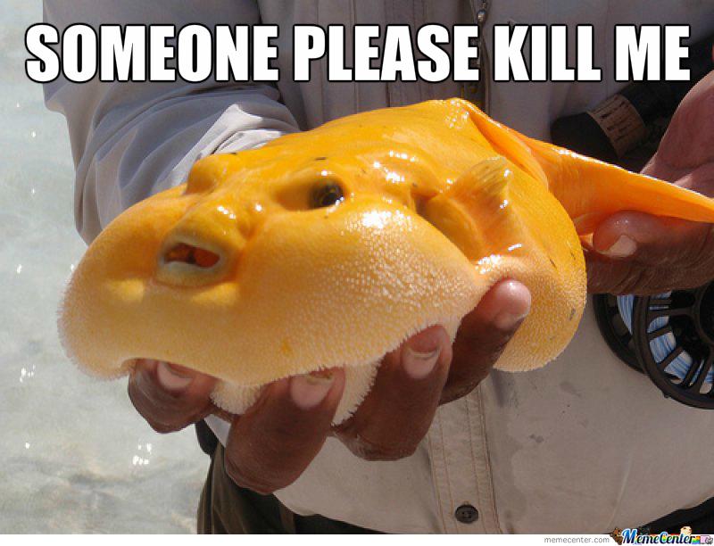 Someone Please Kill Me Mango Meme