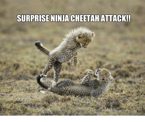 19 Very Funny Cheetah Meme Images And Pictures