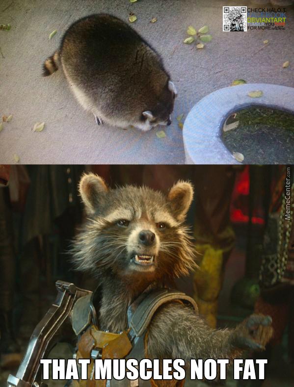 That Muscles Not Fat Raccoon Meme