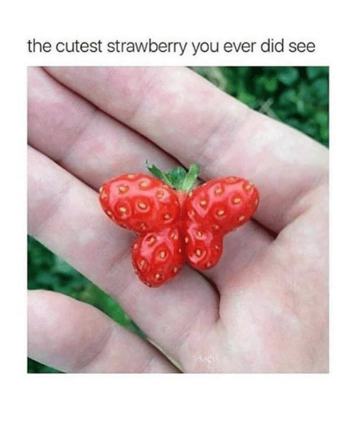 The Cutest Strawberry You Strawberry Meme