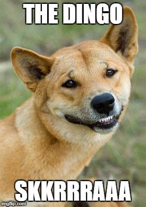 The Dingo SKKRRRAAA Dingo Meme