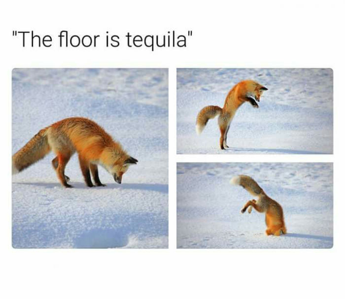 The Floor Is Tequila Fox Meme