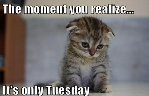 The Moment You Realize Tuesday Meme