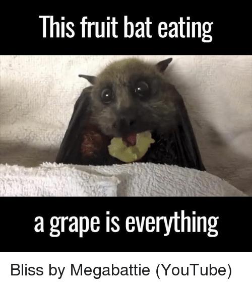 This Fruit Bat Eating Bat Meme