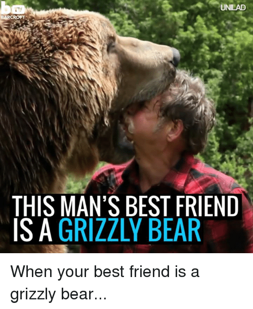 19 Hilarious Grizzly Bear Meme Images And Pictures Memesboy