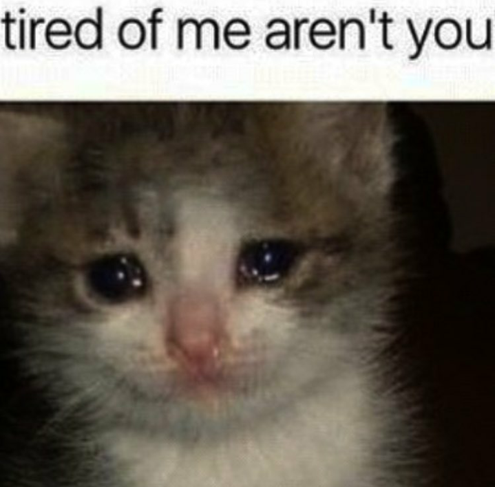 Tired Of Me Aren't You Cat Meme