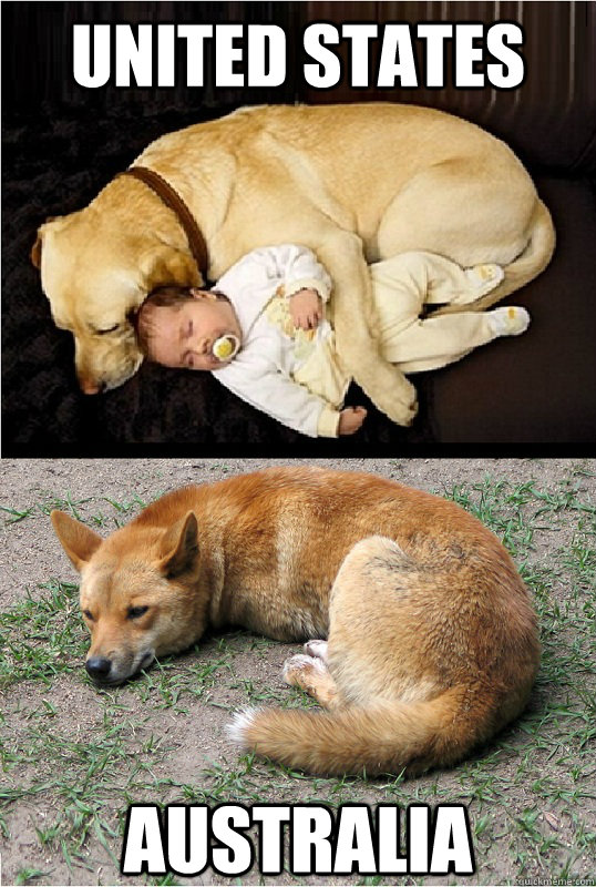 United States Australia Dingo Meme
