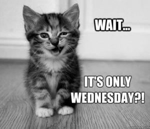 Wait It's Only Wednesday Wednesday Meme