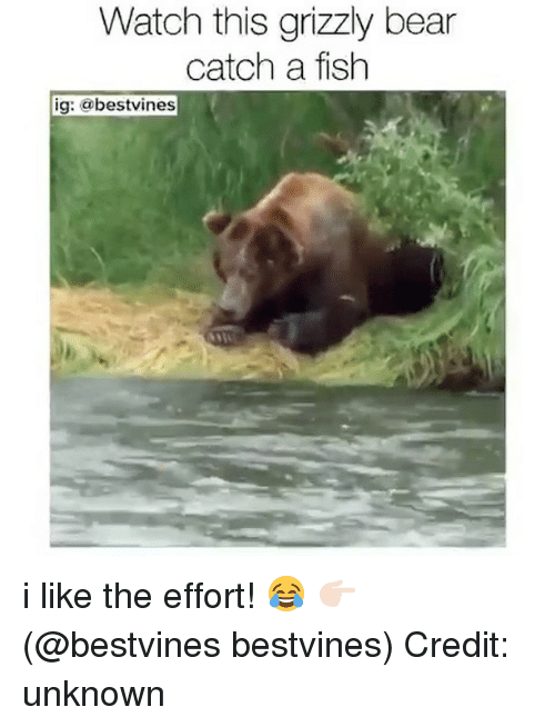 Watch This Grizzly Bear Catch Grizzly Bear Meme