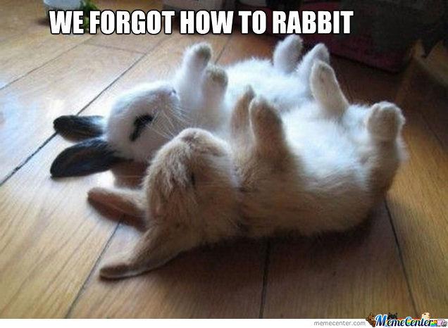 We Forgot How To Rabbit Meme