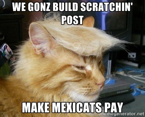 We Gonz Build Scratchin Post Cat Meme
