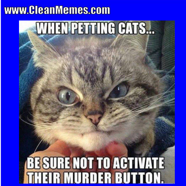 19 Very Funny Cat Memes Clean Images And Pictures Memesboy