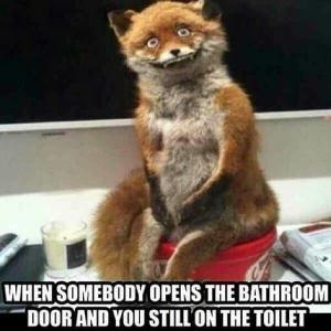 When Somebody Opens The Bathroom Fox Meme