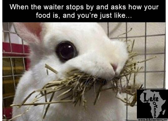 When The Waiter Stops Rabbit Meme