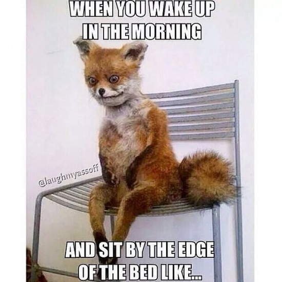 When You Wake Up In The Morning Fox Meme