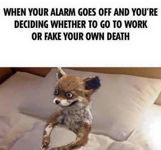 When Your Alarm Goes Off And Fox Meme