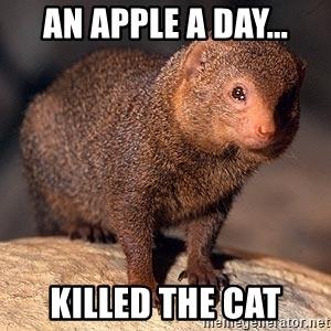 An Apple A Day Mongoose Meme
