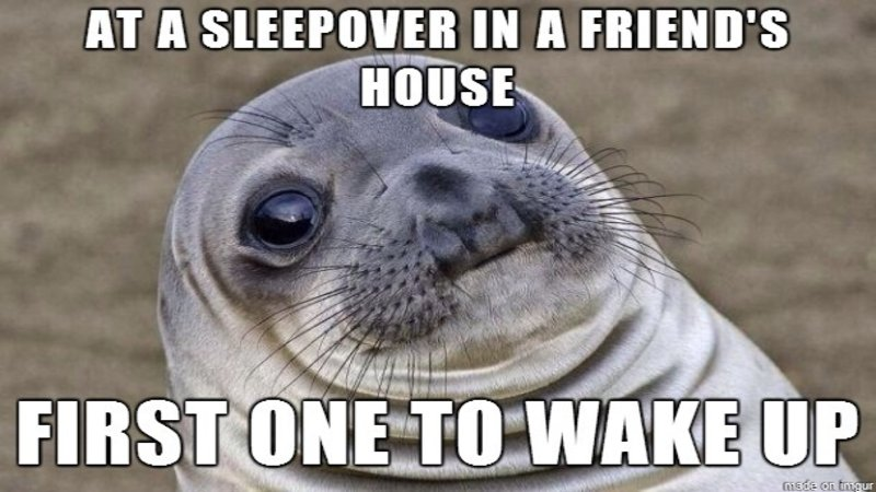 At A Sleepover In Seal Meme