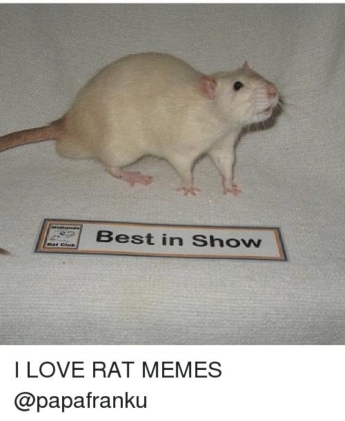 Best In Show Rat Meme