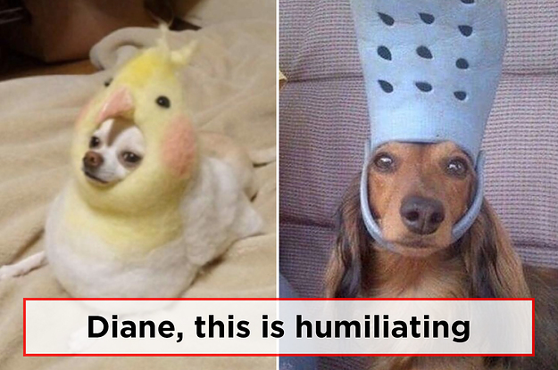 Diane This Is Dogs Meme