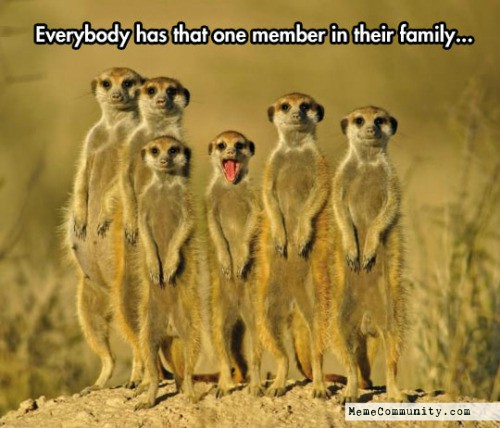 Everybody Has That One Mongoose Meme