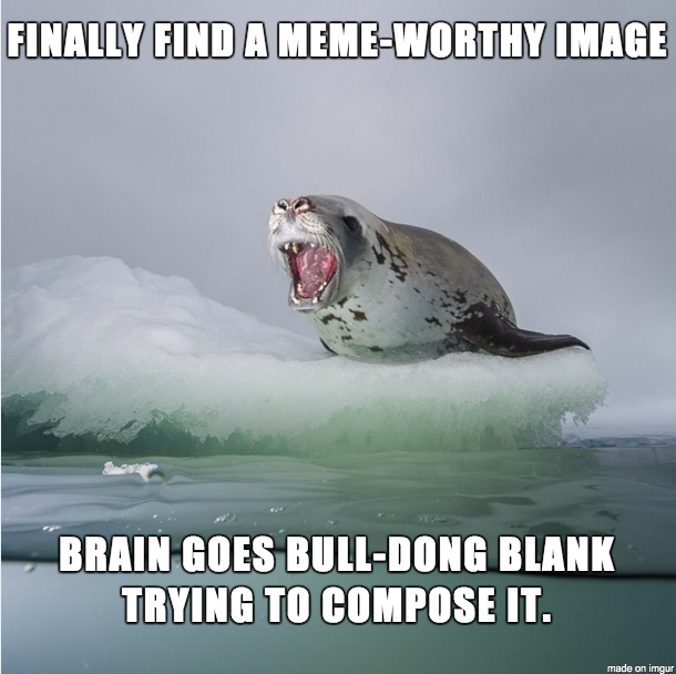 Finally Find A Meme Seal Meme