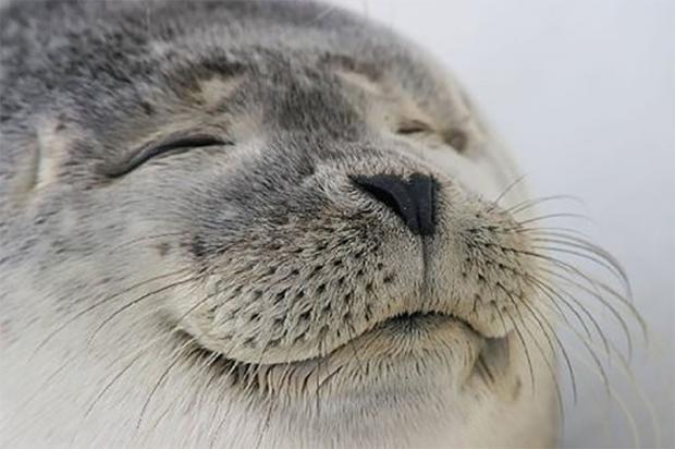 Funny Seal Meme