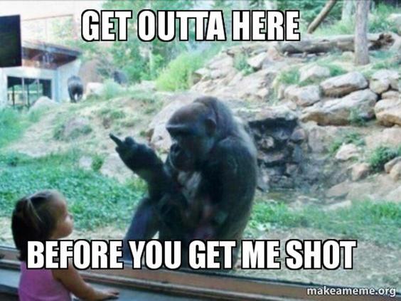 Get Outta Here Before Gorilla Meme