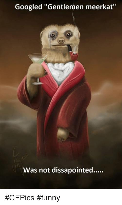 Googled Gentlemen Meerkat Was Meerkat Meme