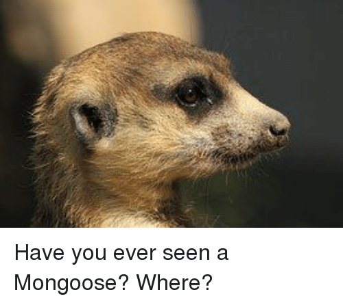 Have You Ever Seen Mongoose Meme
