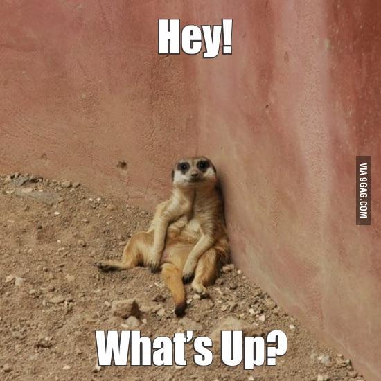 19 Amusing Meerkat Meme That Make You Smile Memesboy