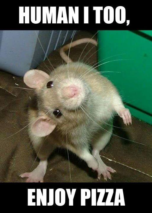 Human I Too Enjoy Rat Meme