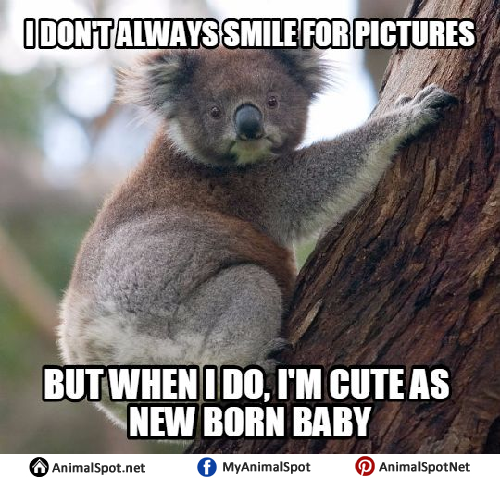 I Don't Always Smile Koala Meme