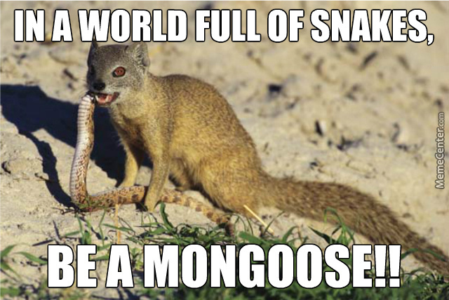 In A World Full Mongoose Meme