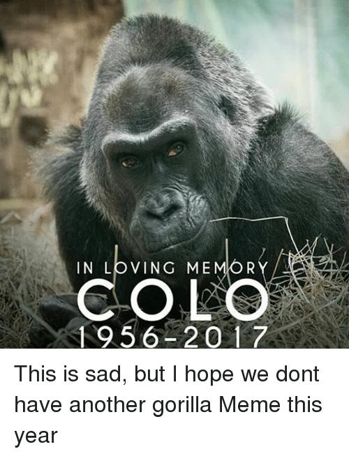 In Loving Memory Colo Gorilla Meme