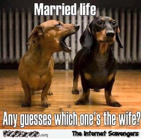 Married Life Any Guesses Wife Meme