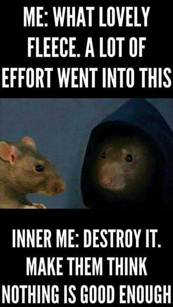 Me What Lovely Fleece Rat Meme