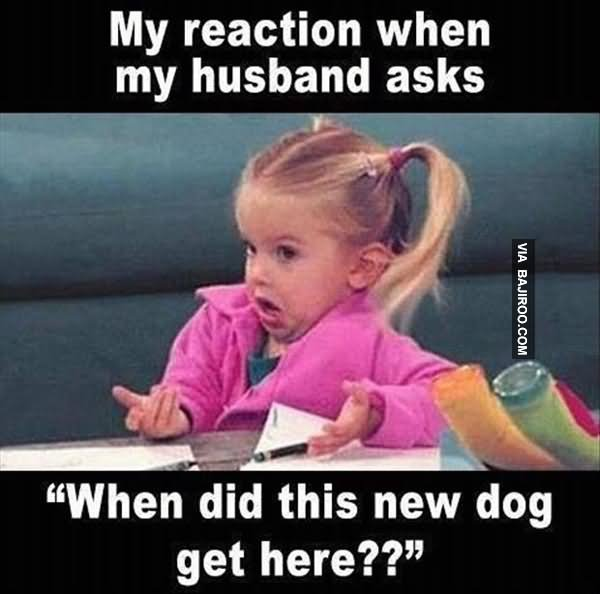 My Reaction When My Husband Meme