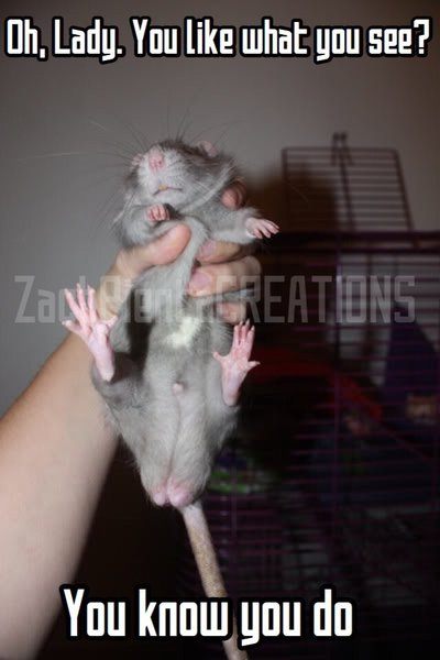 Oh Lady You Like Rat Meme