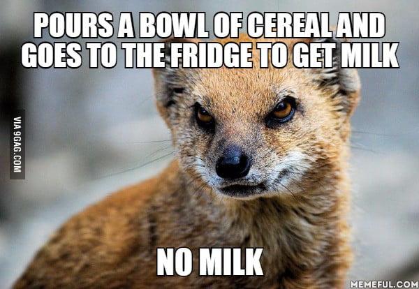 Purs A Bowl Of Mongoose Meme