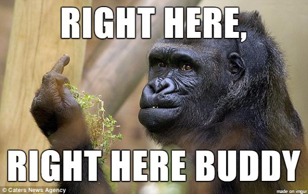 Right Here Right Here Gorilla Meme