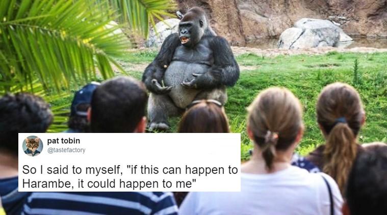 So I Said To Myself Gorilla Meme